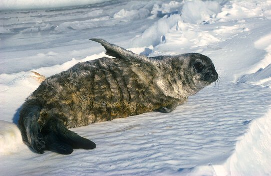 Antarctic seals and other animals
