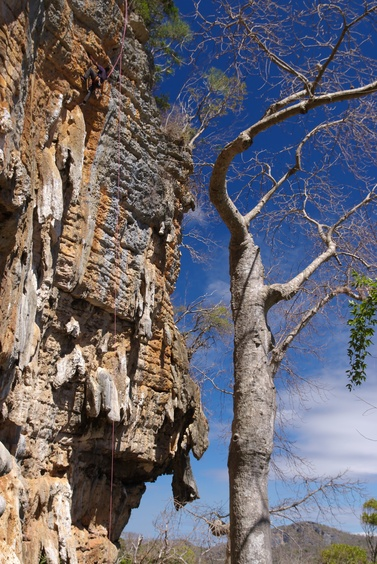 [20081003_114309_Perroquet.jpg] Eric climbing next to a baobab at the Perroquet.