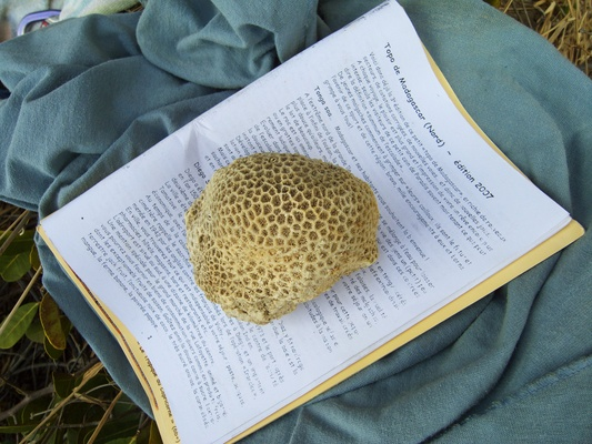 [20081005_140700_Corals.jpg] One of the many pieces of coral covering the beach comes in handy to keep the guidebook open at the right page. Michel Piola was here, putting up routes with his usual talent, as well as penning the guidebook covering the islands and the Montagne des Français. Unfortunately it doesn't cover the Perroquet.