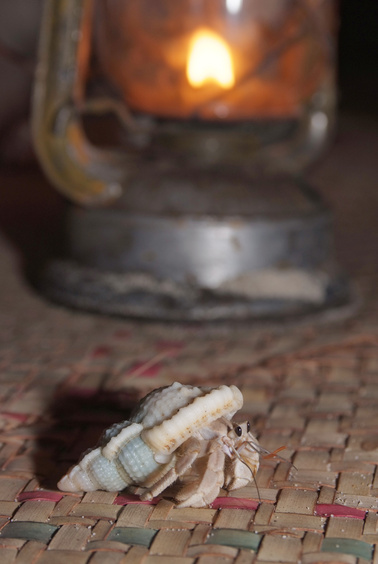 [20081005_182700_HermitCrab_.jpg] An hermit crab crossing the floor of the hut. Those gentle animals are thought to hold the spirit of the ancestors buried on the island and thus deserve respect.