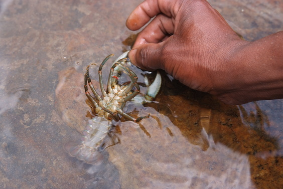 [20081023_132638_Crayfish.jpg] ...But then he put it back gently in the river, saying that since we are in a national park, there's no fishing allowed. Never mind, the broiled chicken dinner was excellent.