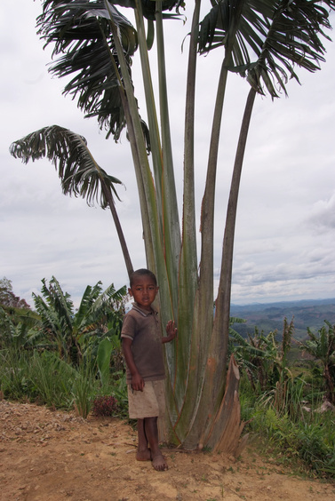 [20081024_112151_TravelersTree_Villages_.jpg] The son of our cook showing a Traveler's Tree, one of the symbols of Madagascar.