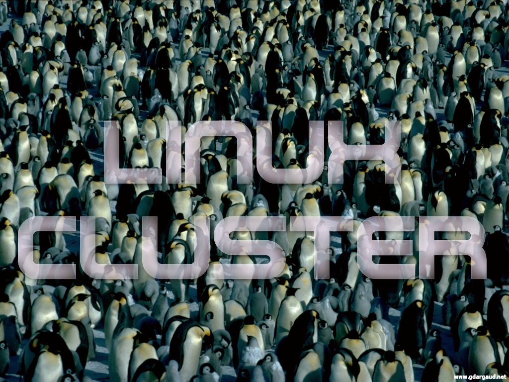 [ManyEmperors_LinuxCluster.jpg] A cluster of penguins...