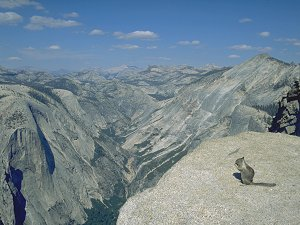 [HalfDomeSquirel.jpg] Squirrel eating Power Bar on the top of Half Dome
