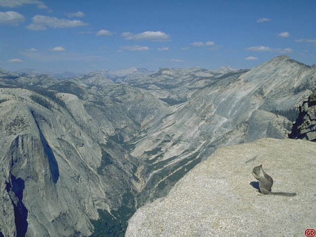 [HalfDomeSquirel.jpg] Grey squirrel on the summit of Half Dome, Yosemite.