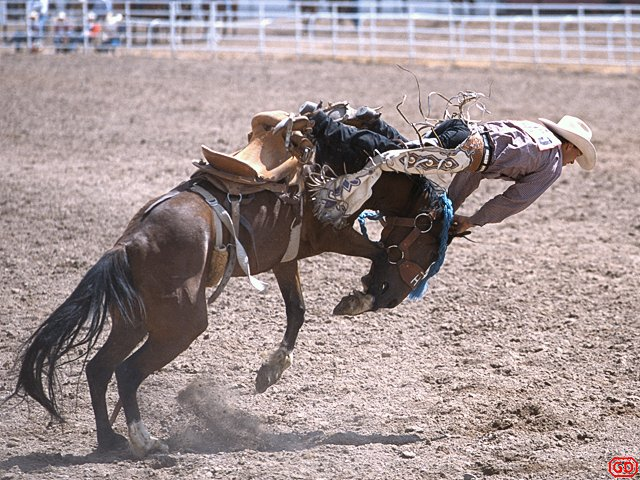 [RodeoGetOff.jpg] Cowboy about to receive a headache during a Wyoming rodeo.