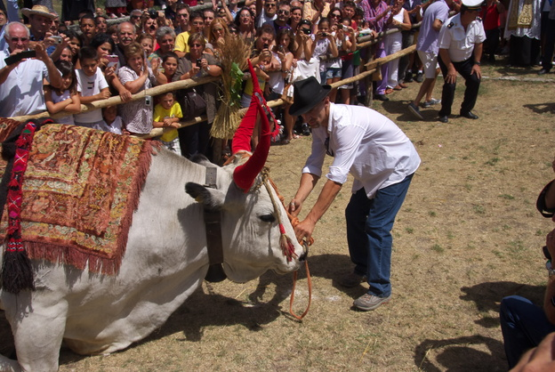 [20120805_130455_SantaMariaDellaNeve.jpg] And the bull is made to kneel in front of the church building with crowds watching.