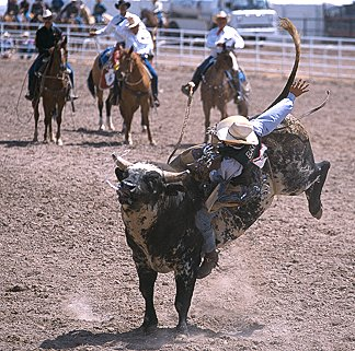 [RodeoBull.jpg] Bull riding... well kinda...