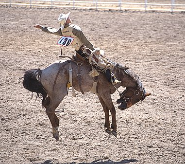 [RodeoHorseJump.jpg] Saddled horse riding.