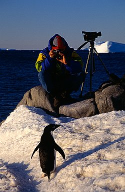 [PenguinPhoto.jpg] A penguin taking a pause for a photographer