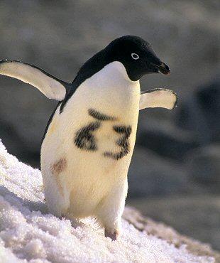 The Penguin FAQ