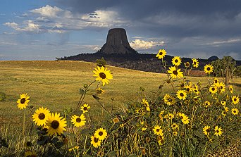 [DT_Sunflower.jpg] In the middle of gentle hills, who else than the Devil or aliens could have erected such a dark tower.