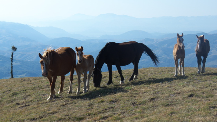 [20120810_074429_LaScarpa.jpg] Group of semi-wild horses in the morning, next to the Biffa.